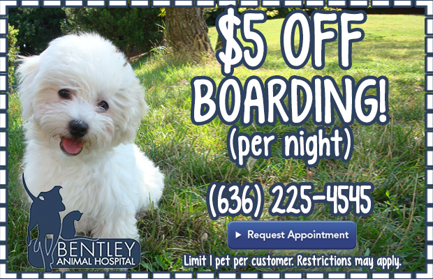 Bentley Animal Hospital Coupon Fenton MO
